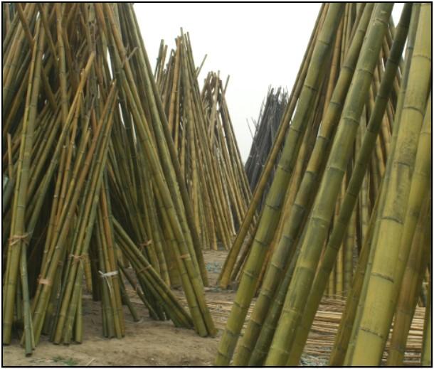 bambus l230 cm. Black Bedroom Furniture Sets. Home Design Ideas